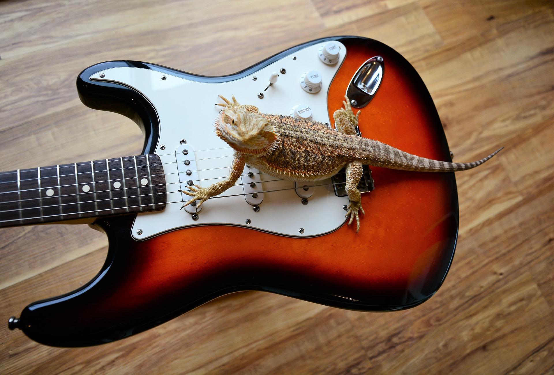 Rock 'n Roll Animals